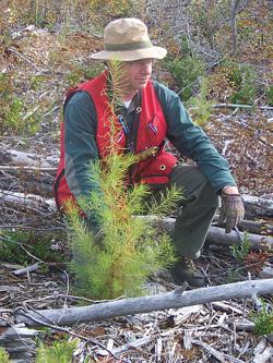2 Year Old Seedling – Dennis Parent200